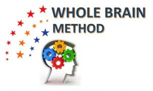 whole-brain-m